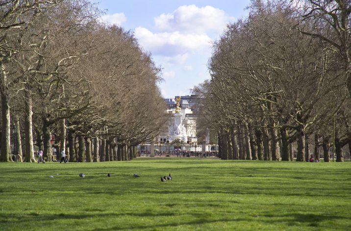 Vista del parque frente al Buckingham Palace, residencia oficial de la reina de Inglaterra.