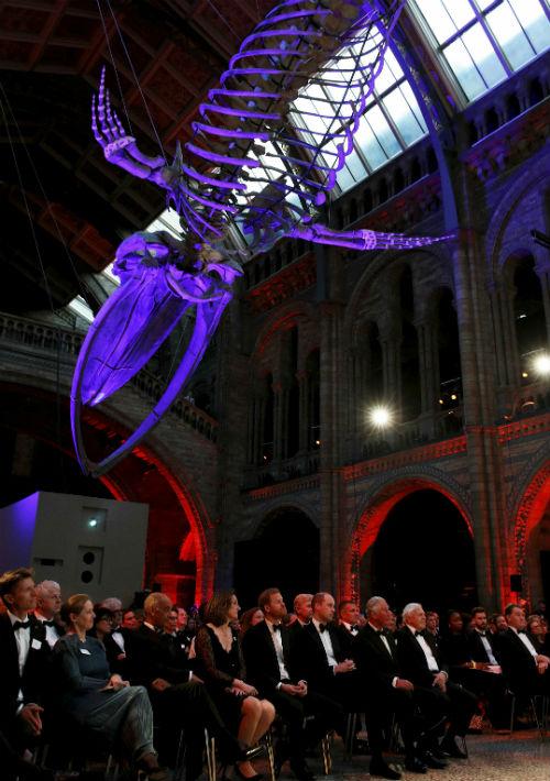 """El Museo de Historia Natural de Londres sirvió de escenario para el lanzamiento de esta nueva producción de la plataforma de """"streaming"""" Netflix.  (AP)"""