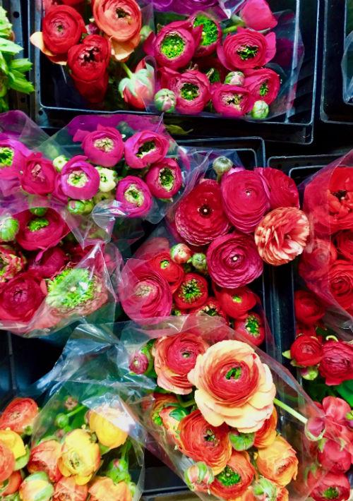 """Si es mayo, los """"Ranunculus"""" en todas sus tonalidades, están en su mejor momento. (Foto: Suministrada)"""