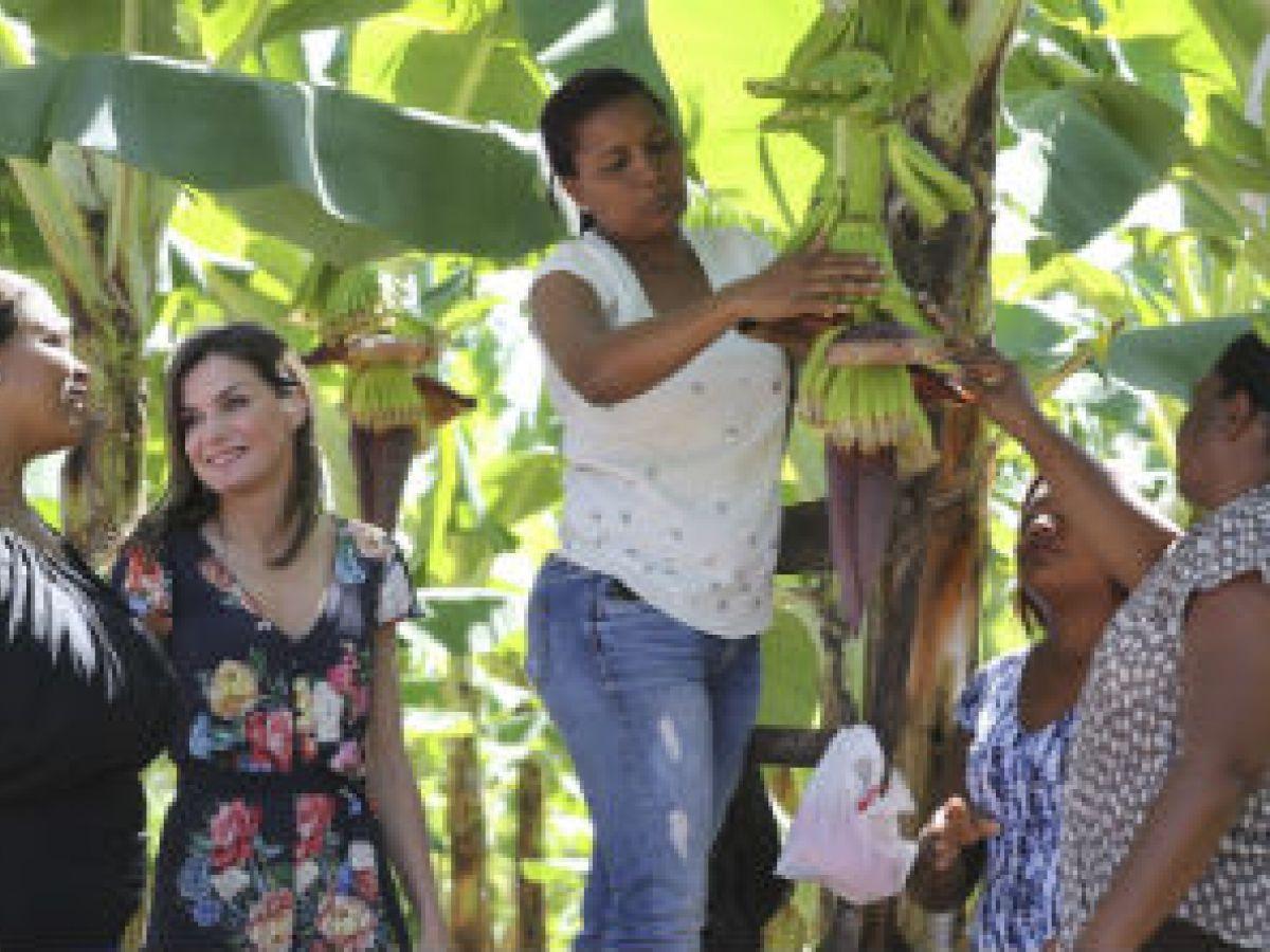 La reina Letizia visita cultivos de guineo orgánico en su segundo día en República Dominicana