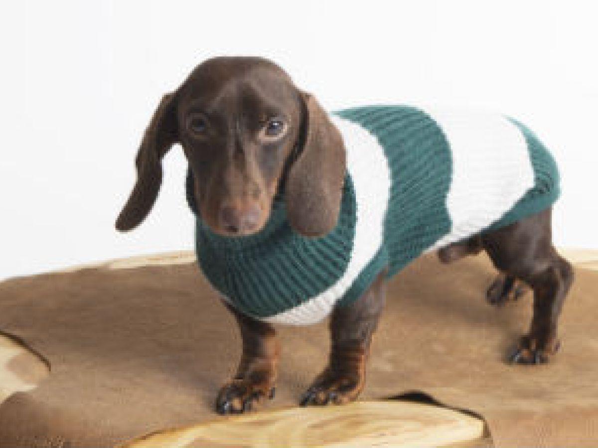 El diseño italiano llega a la ropa canina