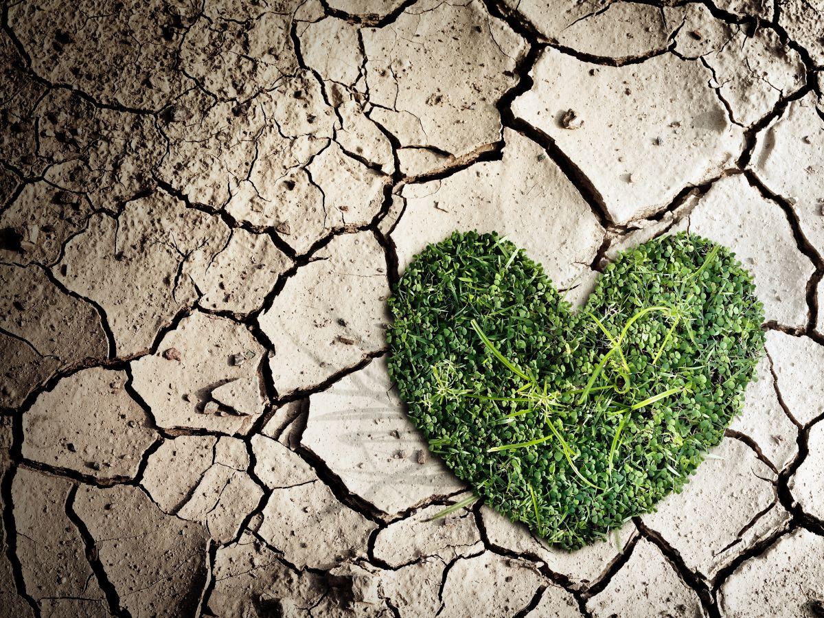 Sobrevivir  desde el amor
