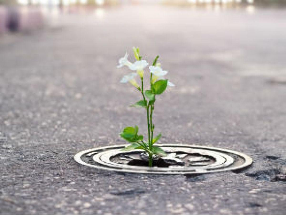 El realismo  de la esperanza