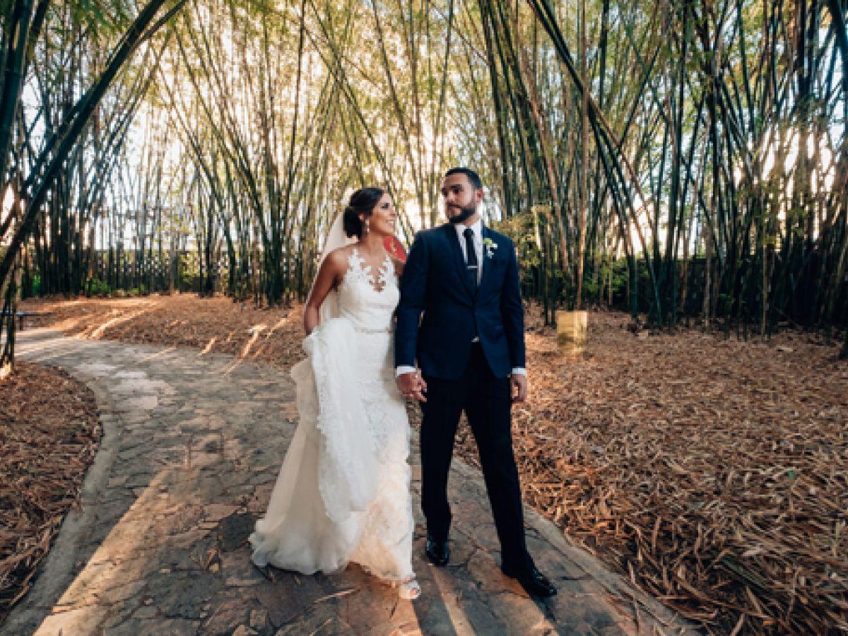 Galería de bambúes