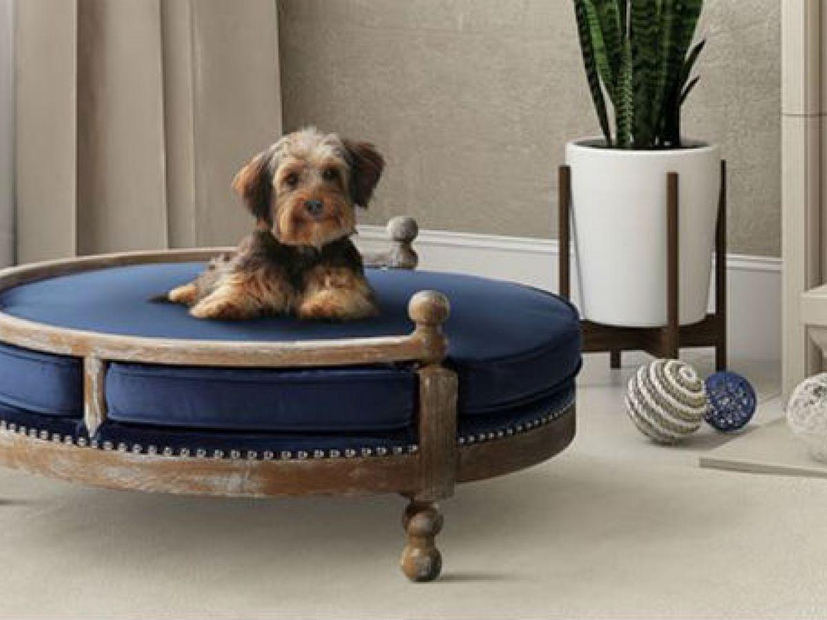 Regalos prácticos y originales para tus mascotas
