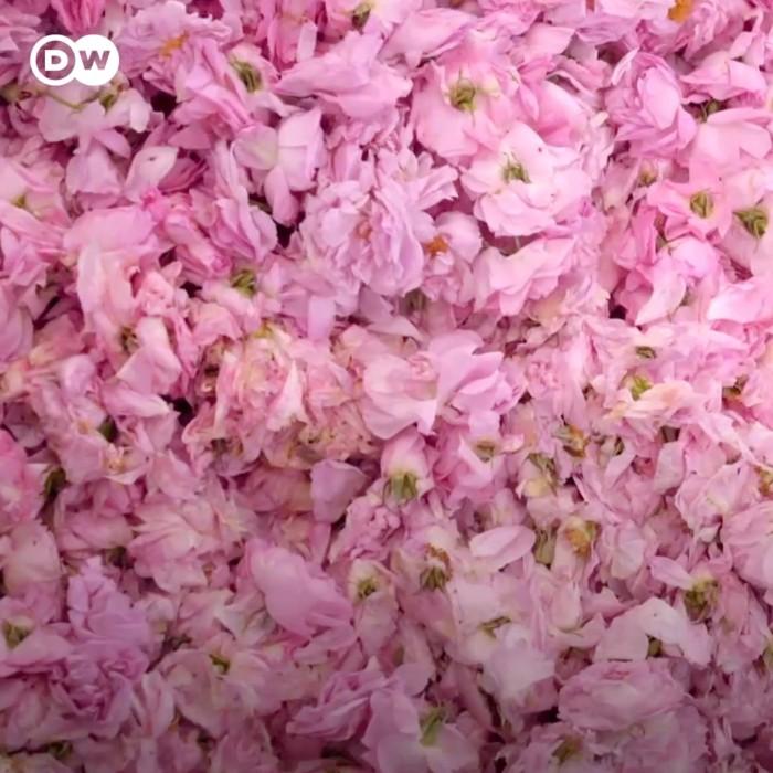 Este es el aceite de rosas más caro del mundo: por 33 onzas se pagan casi $8,000